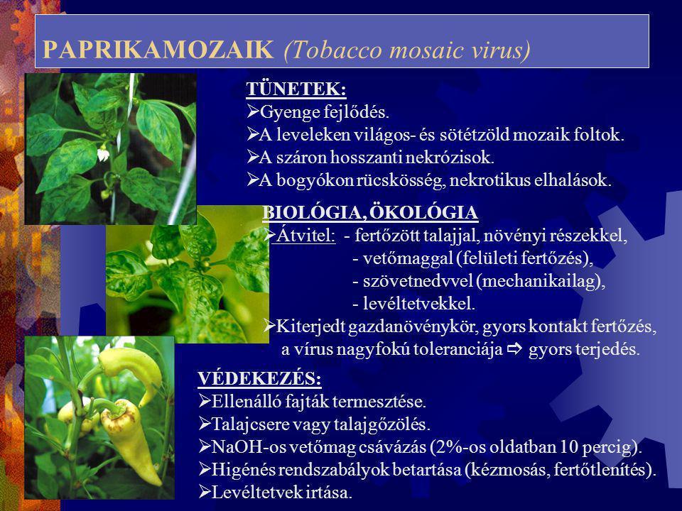 PAPRIKAMOZAIK (Tobacco mosaic virus)