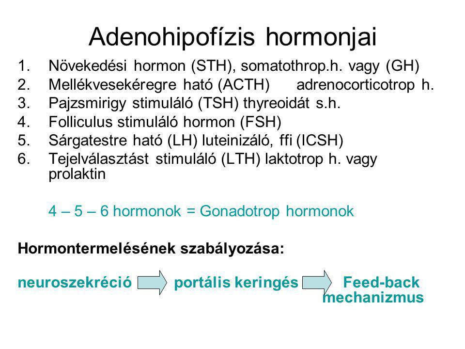 Adenohipofízis hormonjai