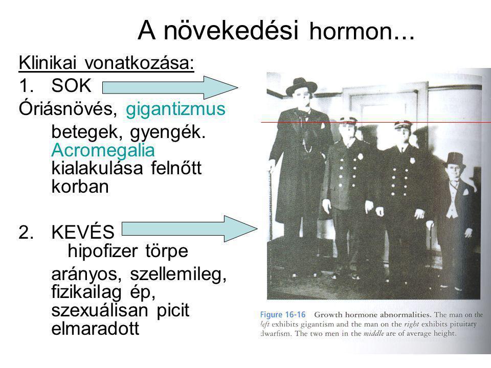 A növekedési hormon... Klinikai vonatkozása: SOK