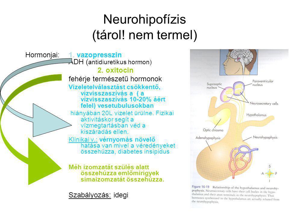 Neurohipofízis (tárol! nem termel)