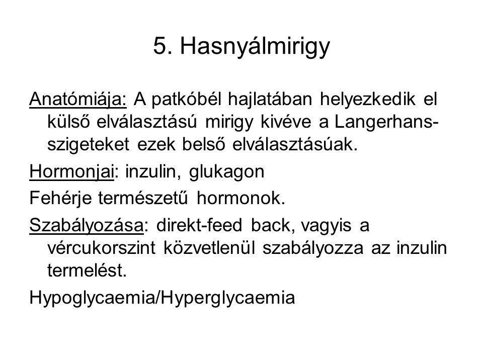 5. Hasnyálmirigy Anatómiája: A patkóbél hajlatában helyezkedik el külső elválasztású mirigy kivéve a Langerhans-szigeteket ezek belső elválasztásúak.