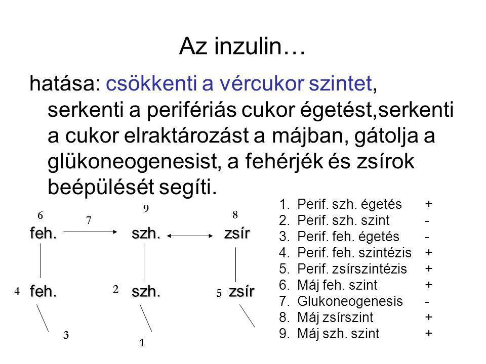 Az inzulin…