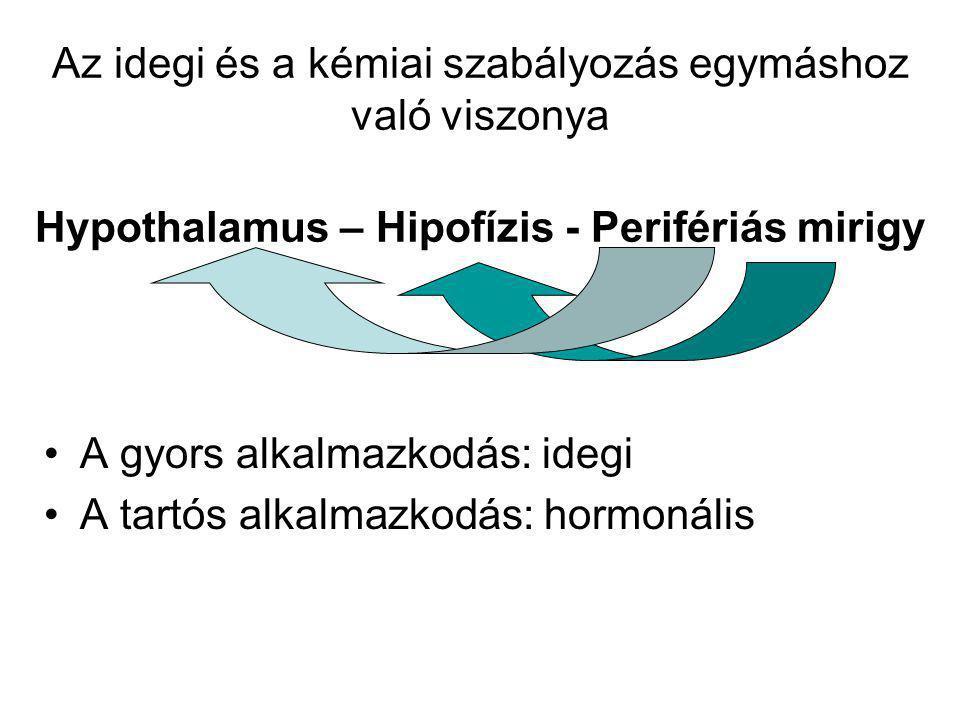 Az idegi és a kémiai szabályozás egymáshoz való viszonya Hypothalamus – Hipofízis - Perifériás mirigy
