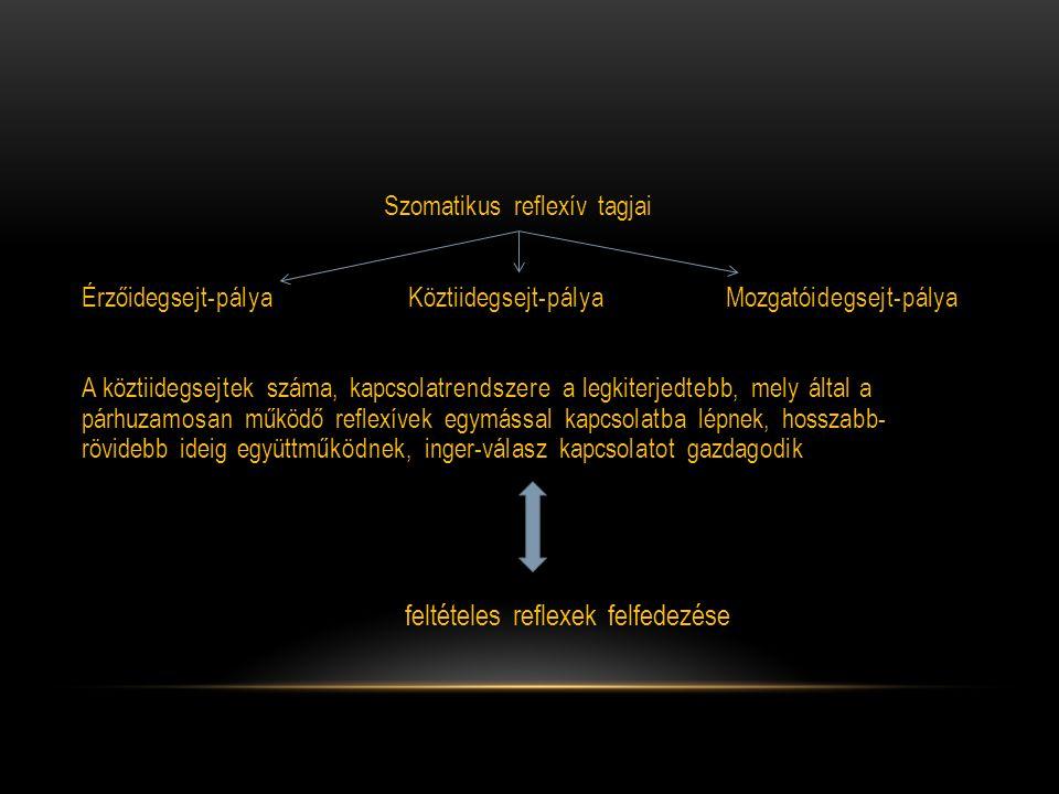 Szomatikus reflexív tagjai