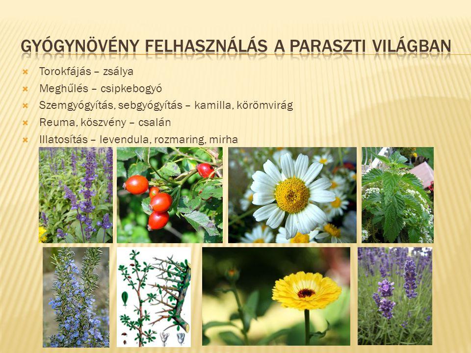 Gyógynövény felhasználás a paraszti világban
