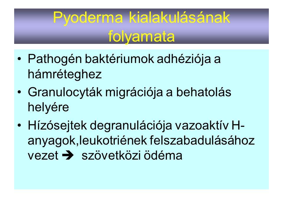 Pyoderma kialakulásának folyamata
