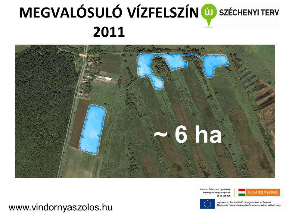MEGVALÓSULÓ VÍZFELSZÍN 2011