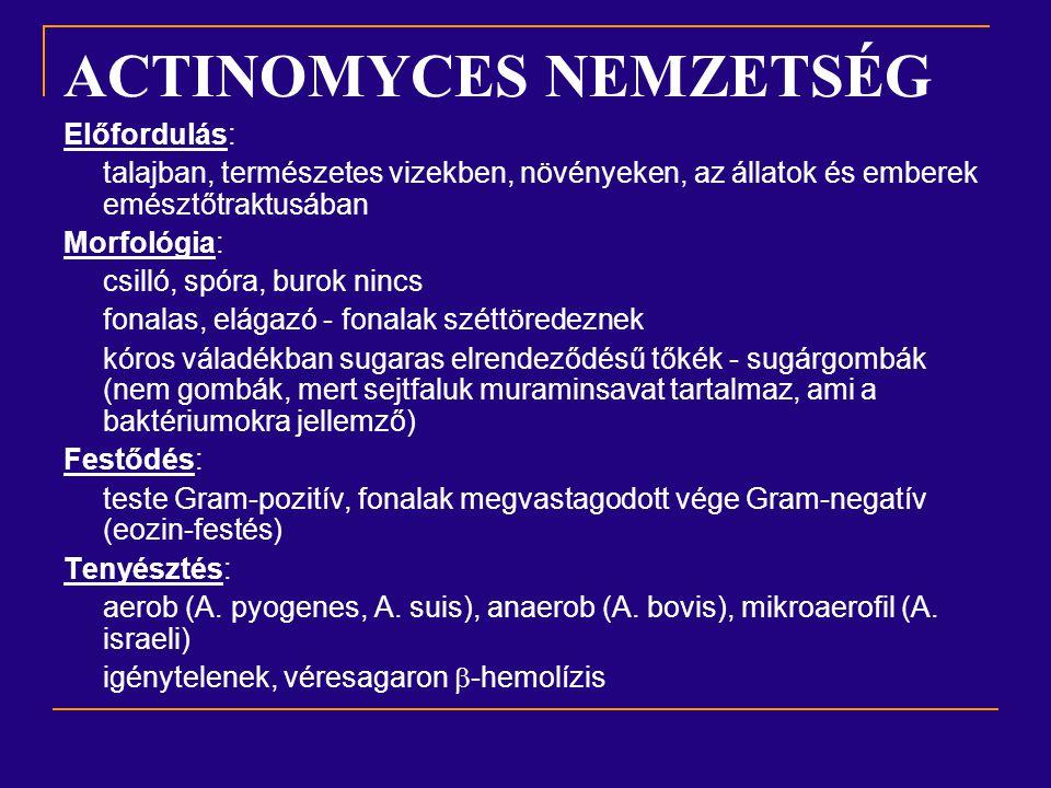 ACTINOMYCES NEMZETSÉG