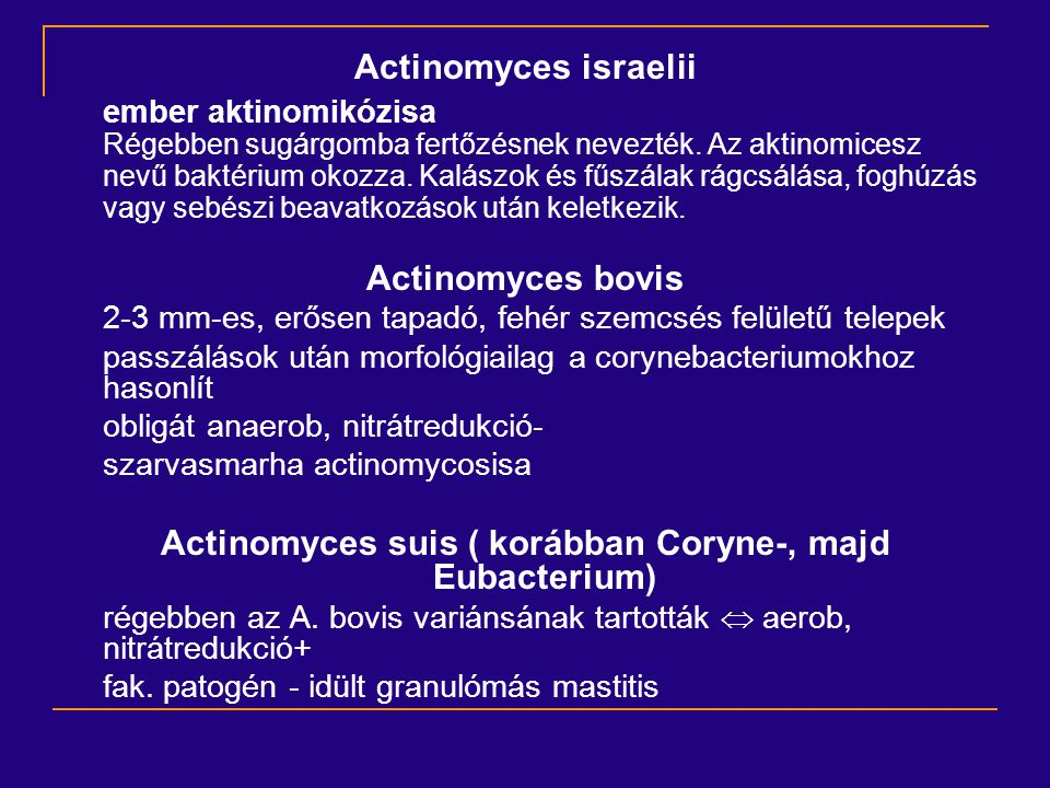 Actinomyces suis ( korábban Coryne-, majd Eubacterium)
