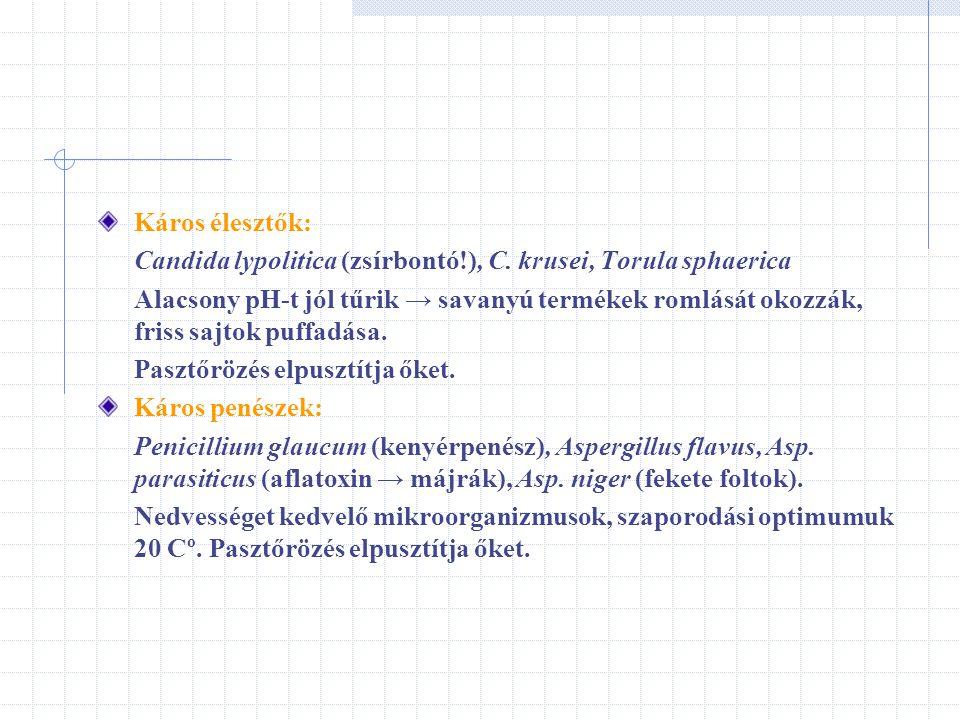 Káros élesztők: Candida lypolitica (zsírbontó!), C. krusei, Torula sphaerica.