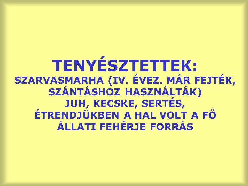 TENYÉSZTETTEK: SZARVASMARHA (IV. ÉVEZ