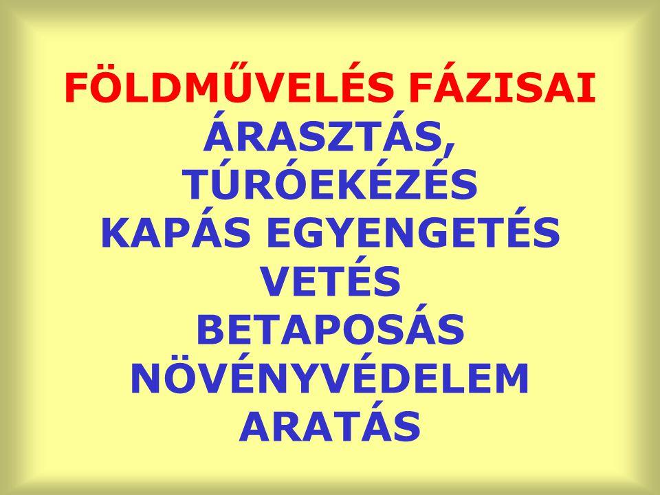 FÖLDMŰVELÉS FÁZISAI ÁRASZTÁS, TÚRÓEKÉZÉS KAPÁS EGYENGETÉS VETÉS BETAPOSÁS NÖVÉNYVÉDELEM ARATÁS