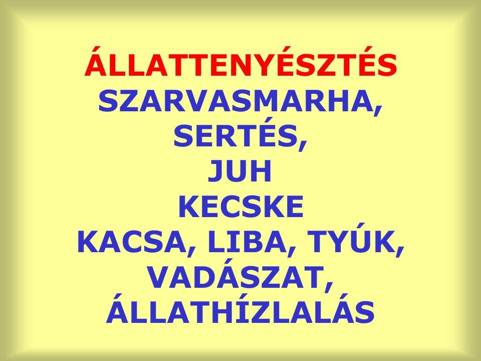 ÁLLATTENYÉSZTÉS SZARVASMARHA, SERTÉS, JUH KECSKE KACSA, LIBA, TYÚK, VADÁSZAT, ÁLLATHÍZLALÁS