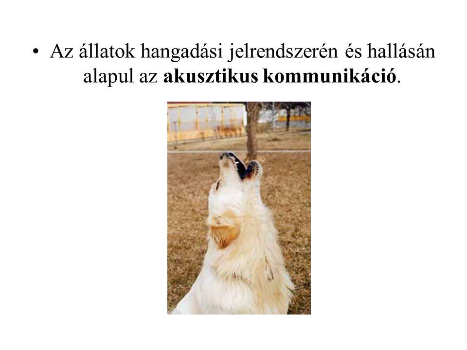 Az állatok hangadási jelrendszerén és hallásán alapul az akusztikus kommunikáció.