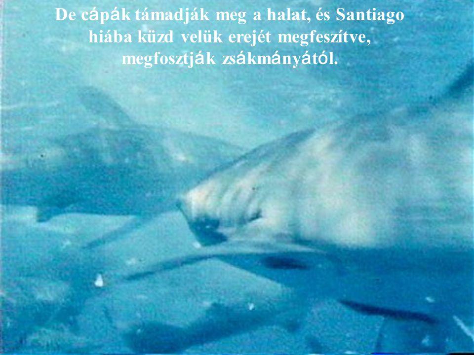 De cápák támadják meg a halat, és Santiago