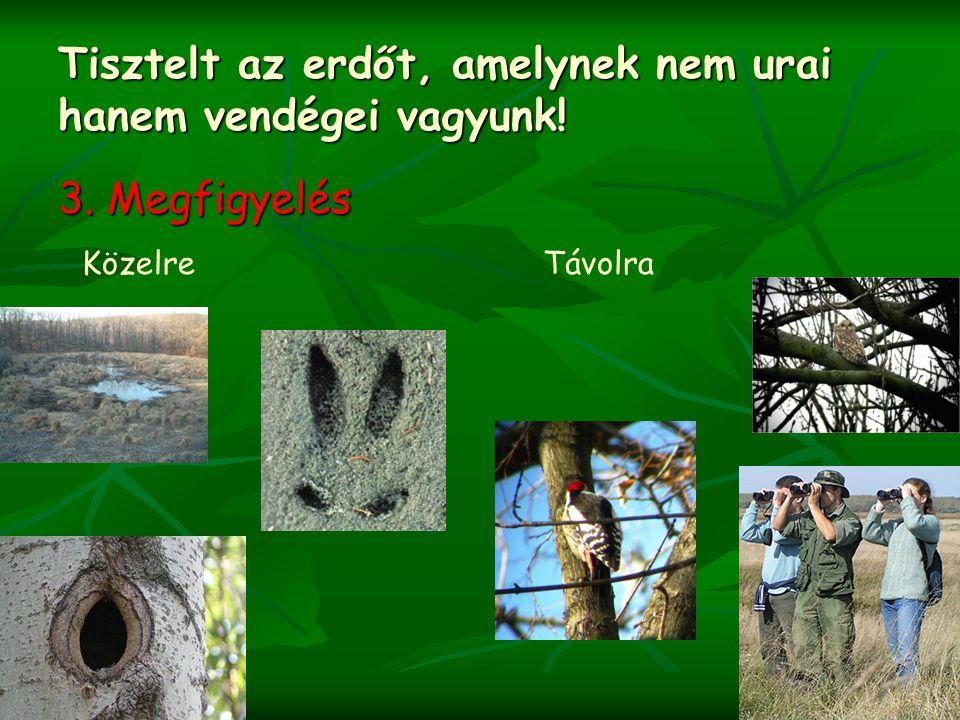 Tisztelt az erdőt, amelynek nem urai hanem vendégei vagyunk!