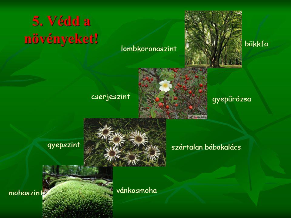 5. Védd a növényeket! bükkfa lombkoronaszint cserjeszint gyepűrózsa