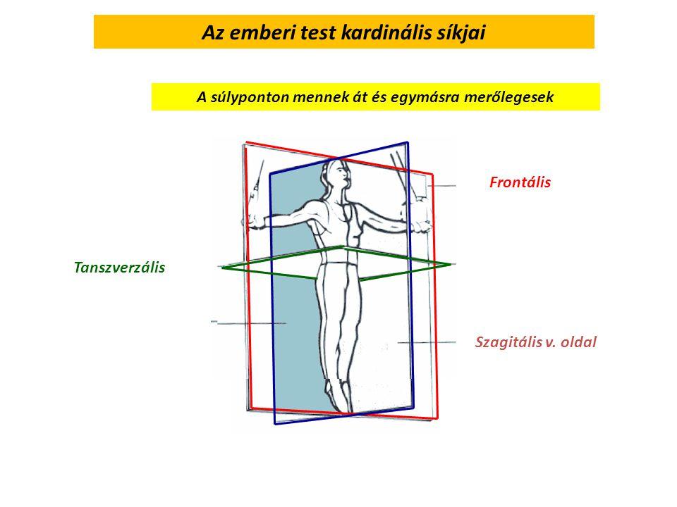 Az emberi test kardinális síkjai