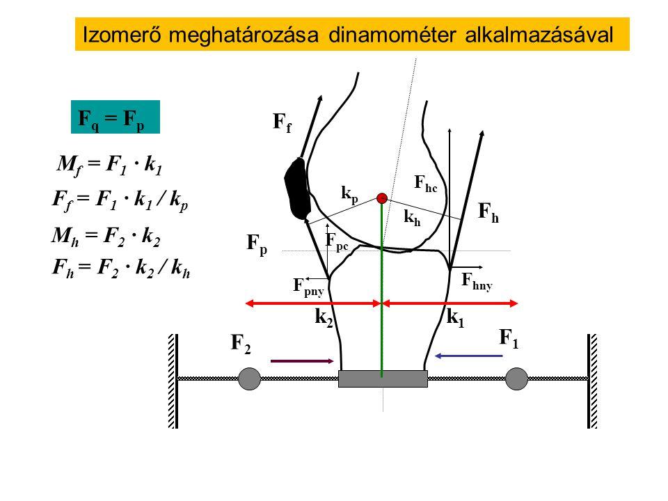 Izomerő meghatározása dinamométer alkalmazásával