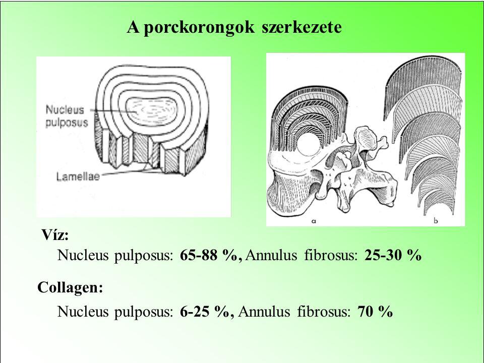 A porckorongok szerkezete