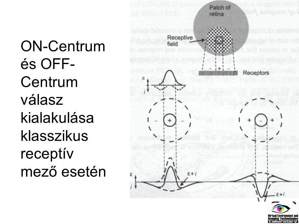 ON-Centrum és OFF-Centrum válasz kialakulása klasszikus receptív mező esetén