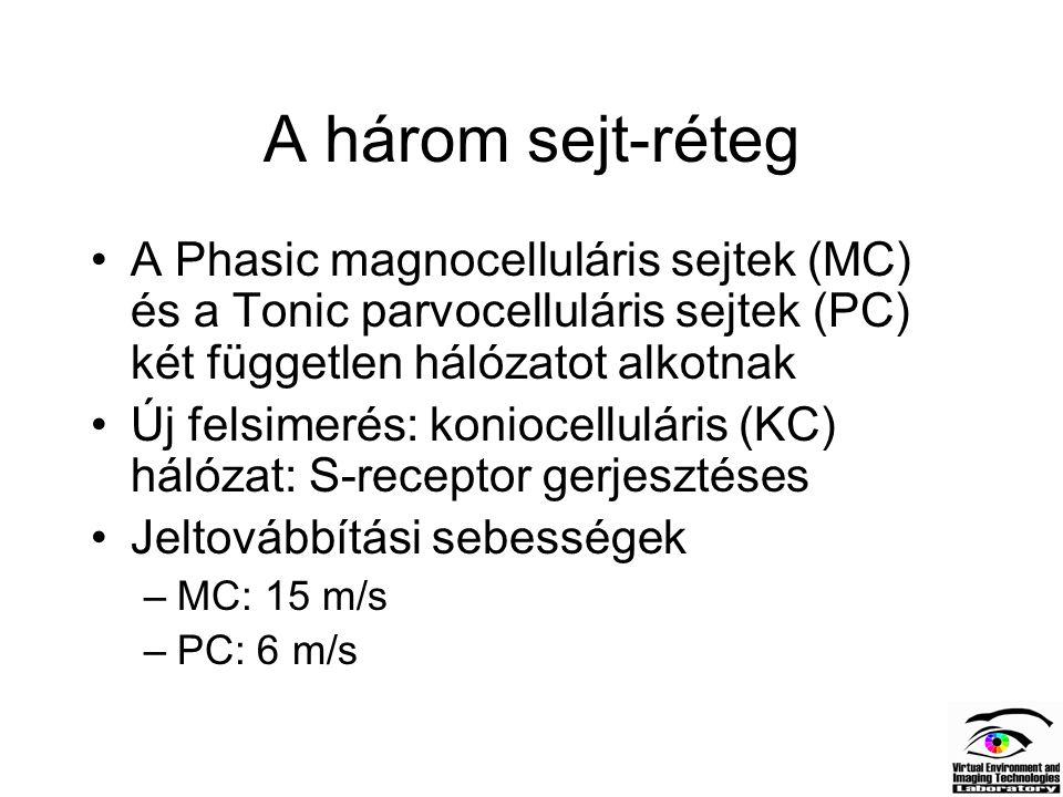A három sejt-réteg A Phasic magnocelluláris sejtek (MC) és a Tonic parvocelluláris sejtek (PC) két független hálózatot alkotnak.
