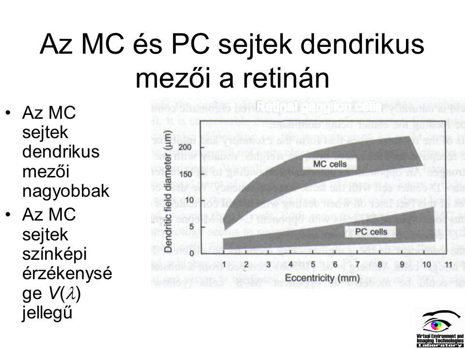 Az MC és PC sejtek dendrikus mezői a retinán