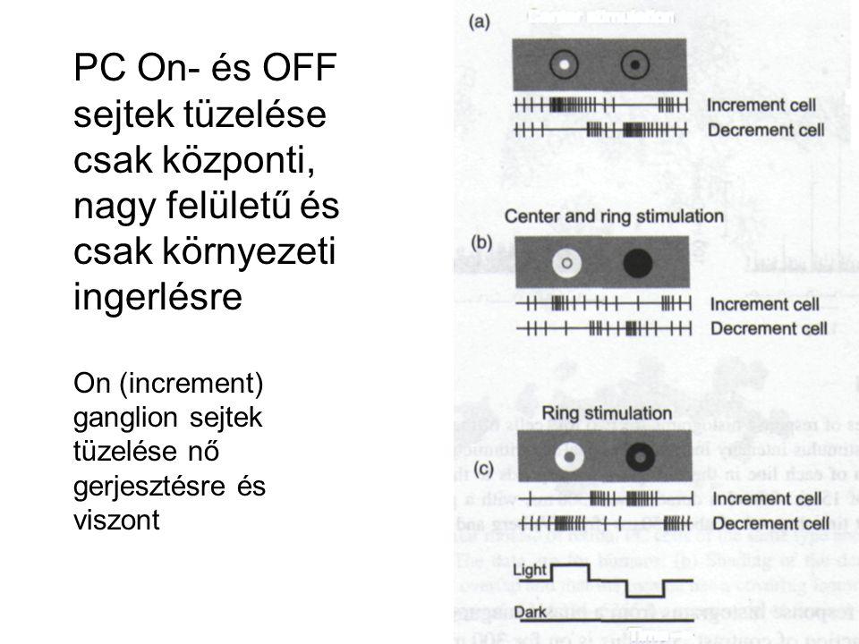 PC On- és OFF sejtek tüzelése csak központi, nagy felületű és csak környezeti ingerlésre On (increment) ganglion sejtek tüzelése nő gerjesztésre és viszont