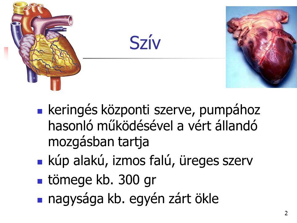 Szív keringés központi szerve, pumpához hasonló működésével a vért állandó mozgásban tartja. kúp alakú, izmos falú, üreges szerv.