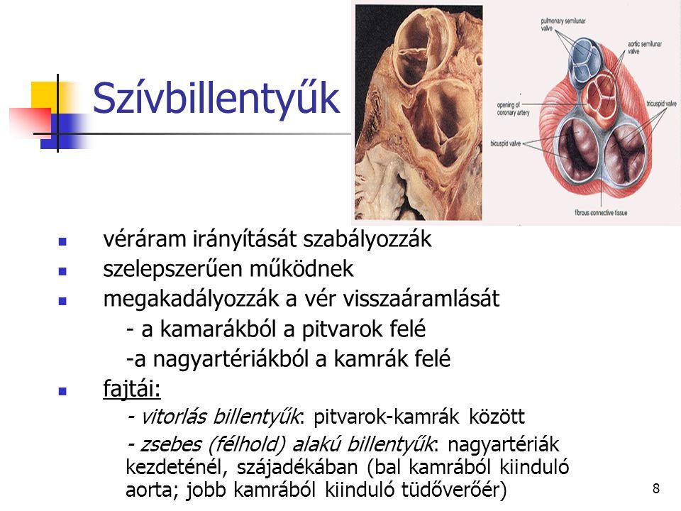 Szívbillentyűk véráram irányítását szabályozzák szelepszerűen működnek