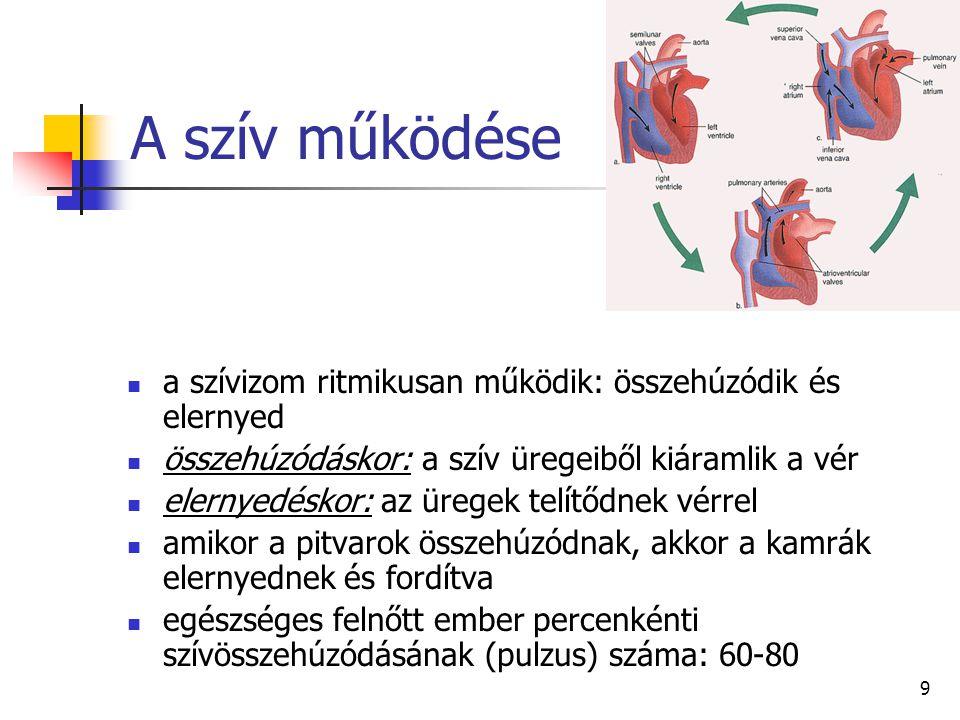 A szív működése a szívizom ritmikusan működik: összehúzódik és elernyed. összehúzódáskor: a szív üregeiből kiáramlik a vér.