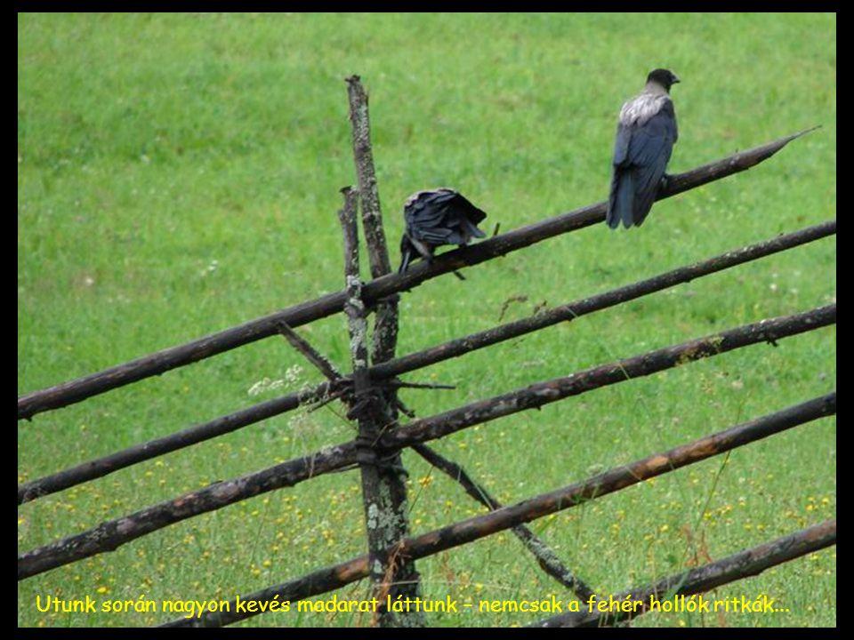 Utunk során nagyon kevés madarat láttunk – nemcsak a fehér hollók ritkák...