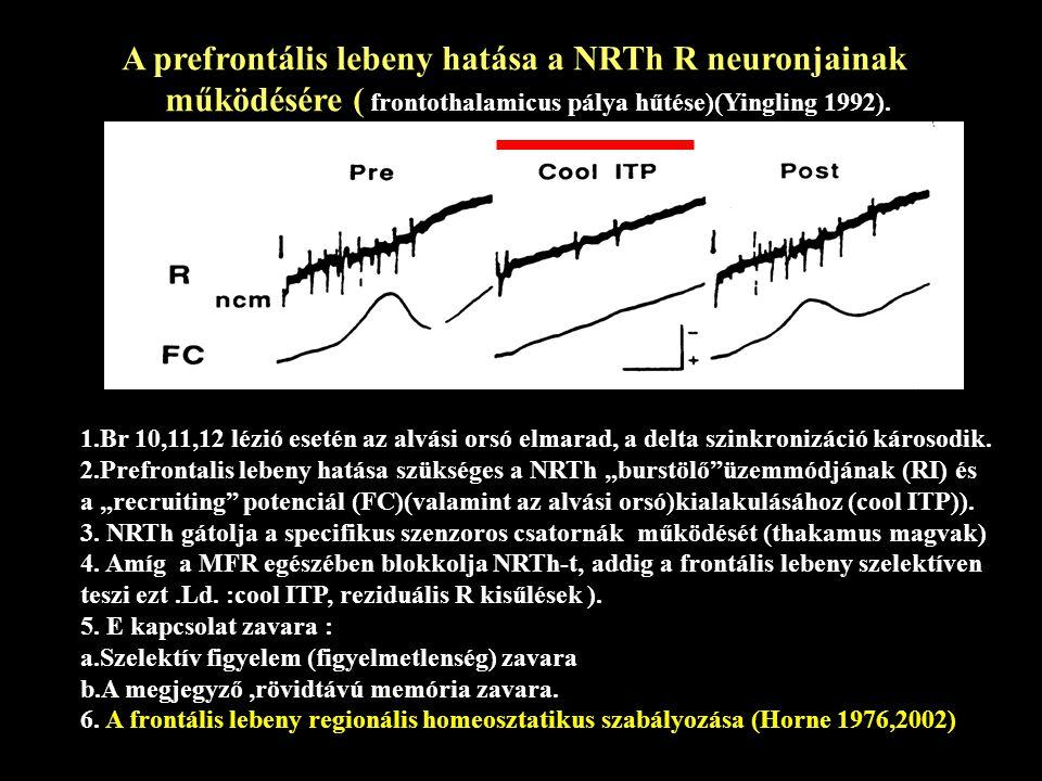 A prefrontális lebeny hatása a NRTh R neuronjainak
