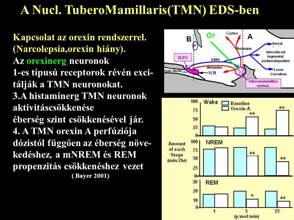 A Nucl. TuberoMamillaris(TMN) EDS-ben