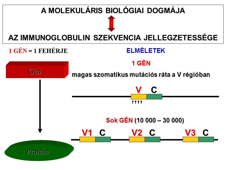 V C V2 C V3 V1 A MOLEKULÁRIS BIOLÓGIAI DOGMÁJA