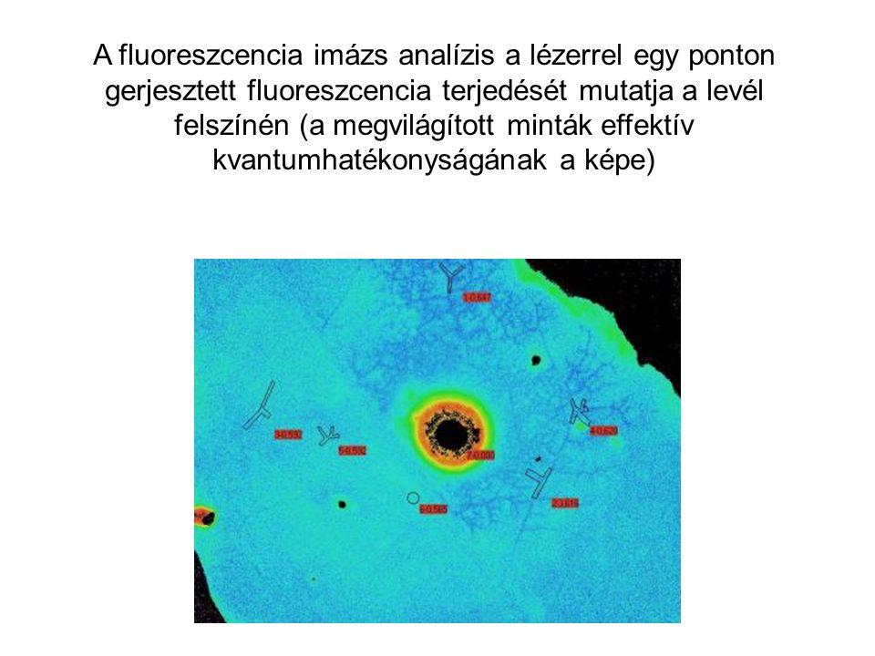 A fluoreszcencia imázs analízis a lézerrel egy ponton gerjesztett fluoreszcencia terjedését mutatja a levél felszínén (a megvilágított minták effektív kvantumhatékonyságának a képe)