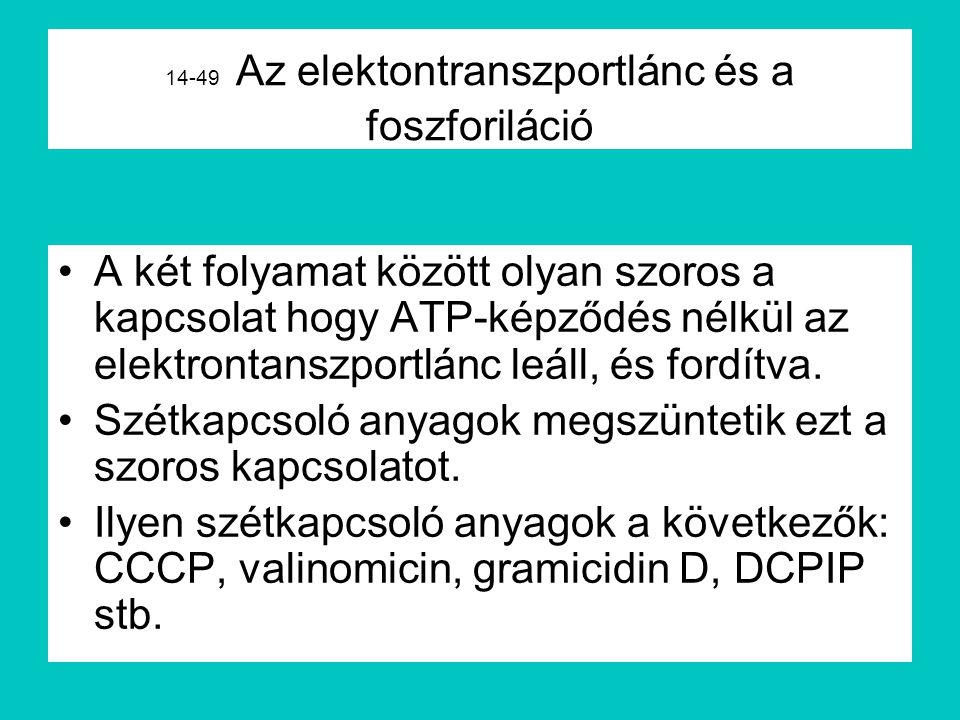 14-49 Az elektontranszportlánc és a foszforiláció