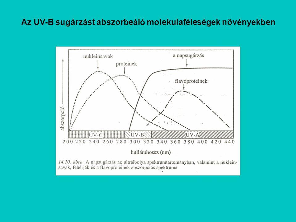 Az UV-B sugárzást abszorbeáló molekulaféleségek növényekben