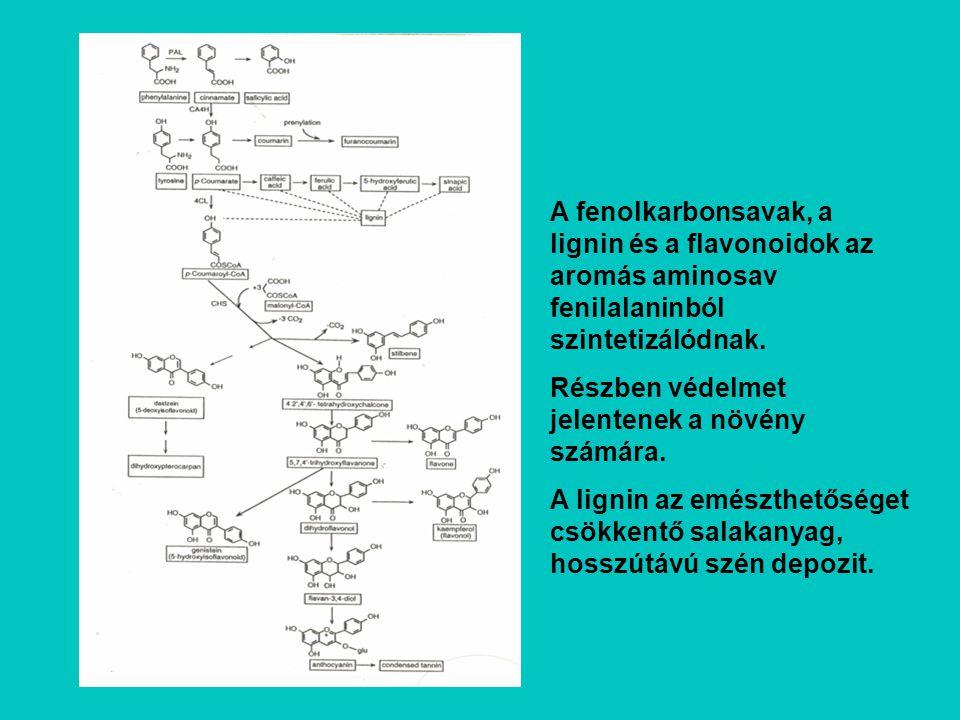 A fenolkarbonsavak, a lignin és a flavonoidok az aromás aminosav fenilalaninból szintetizálódnak.