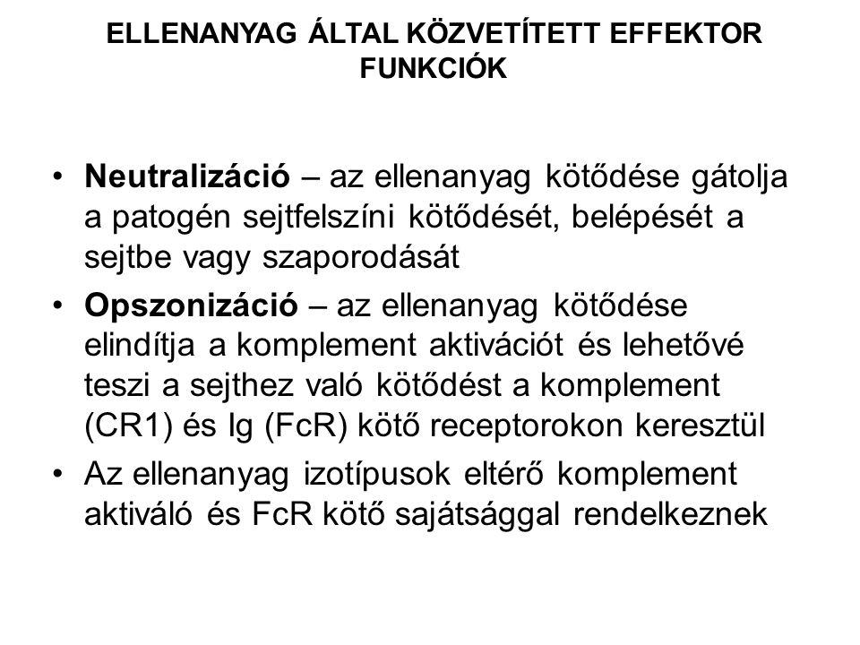 ELLENANYAG ÁLTAL KÖZVETÍTETT EFFEKTOR FUNKCIÓK