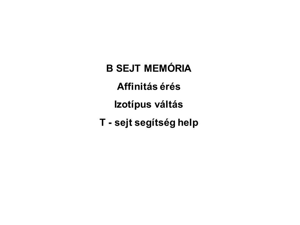 B – CELL B SEJT MEMÓRIA Affinitás érés Izotípus váltás T - sejt segítség help