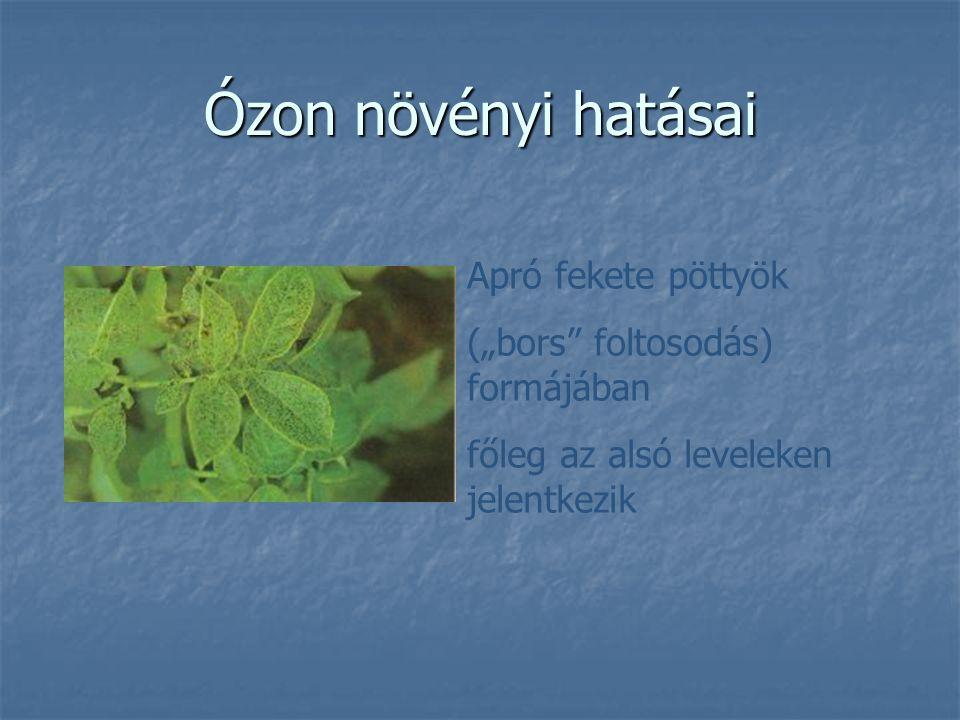 Ózon növényi hatásai Apró fekete pöttyök