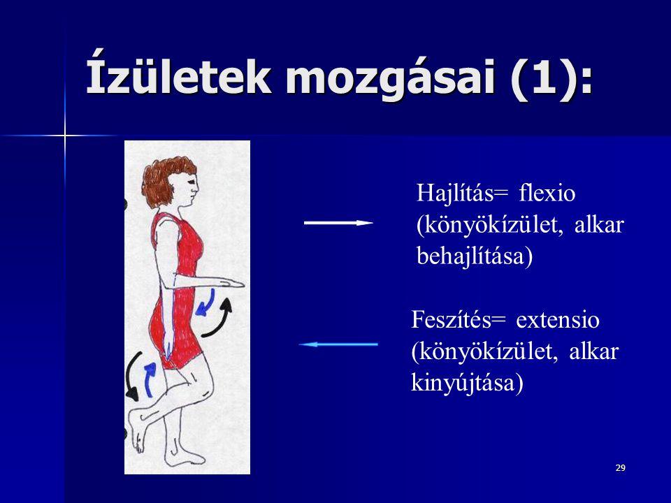Ízületek mozgásai (1): Hajlítás= flexio (könyökízület, alkar behajlítása) Feszítés= extensio (könyökízület, alkar kinyújtása)