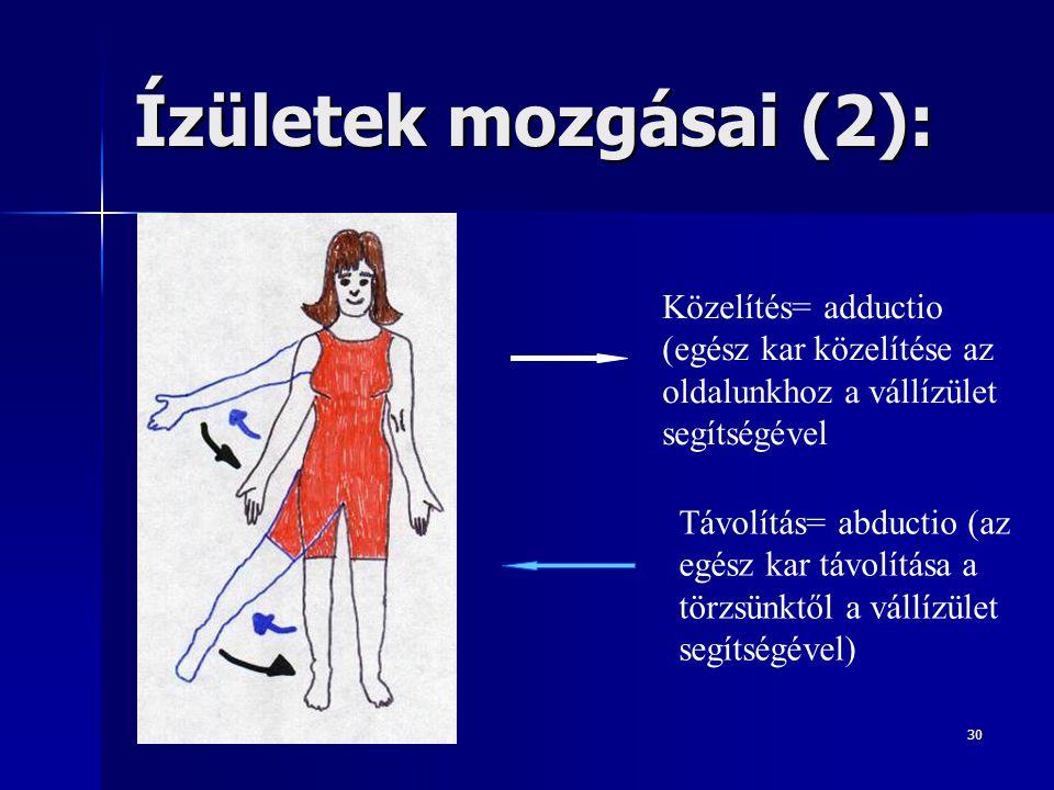 Ízületek mozgásai (2): Közelítés= adductio (egész kar közelítése az oldalunkhoz a vállízület segítségével.