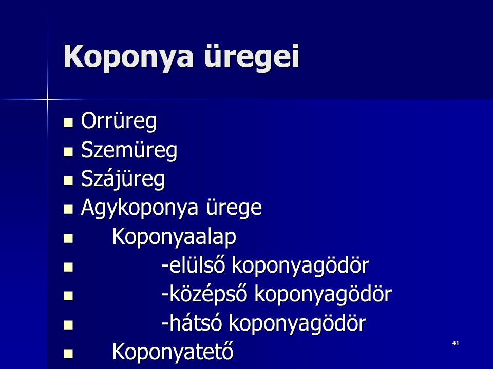 Koponya üregei Orrüreg Szemüreg Szájüreg Agykoponya ürege Koponyaalap