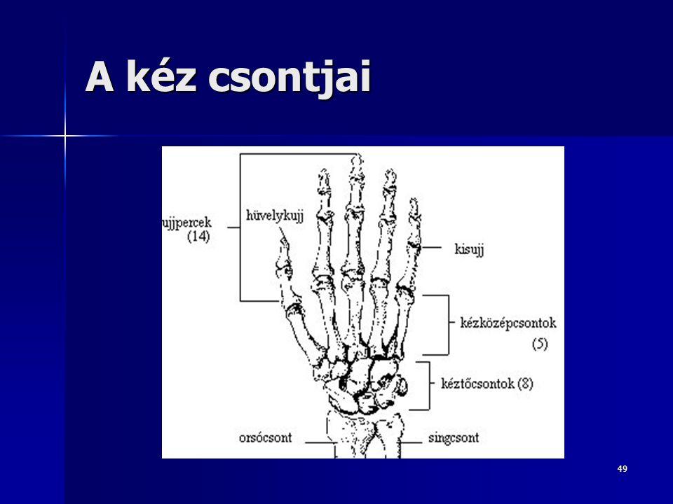 A kéz csontjai