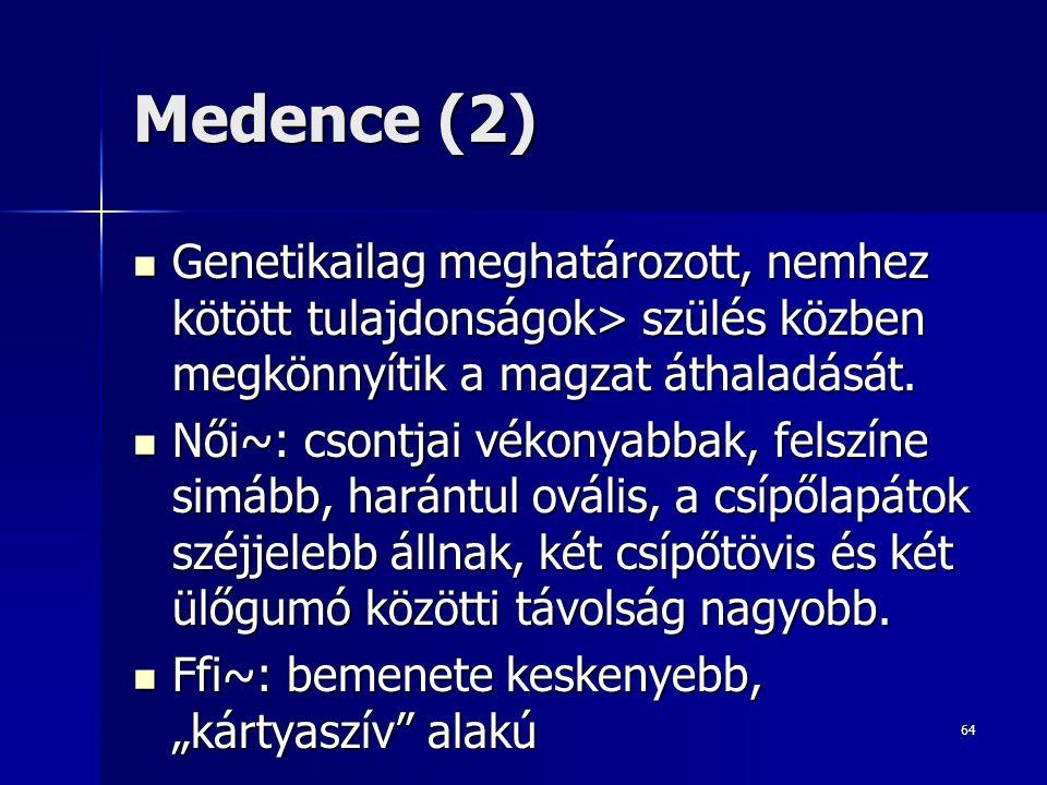 Medence (2) Genetikailag meghatározott, nemhez kötött tulajdonságok> szülés közben megkönnyítik a magzat áthaladását.