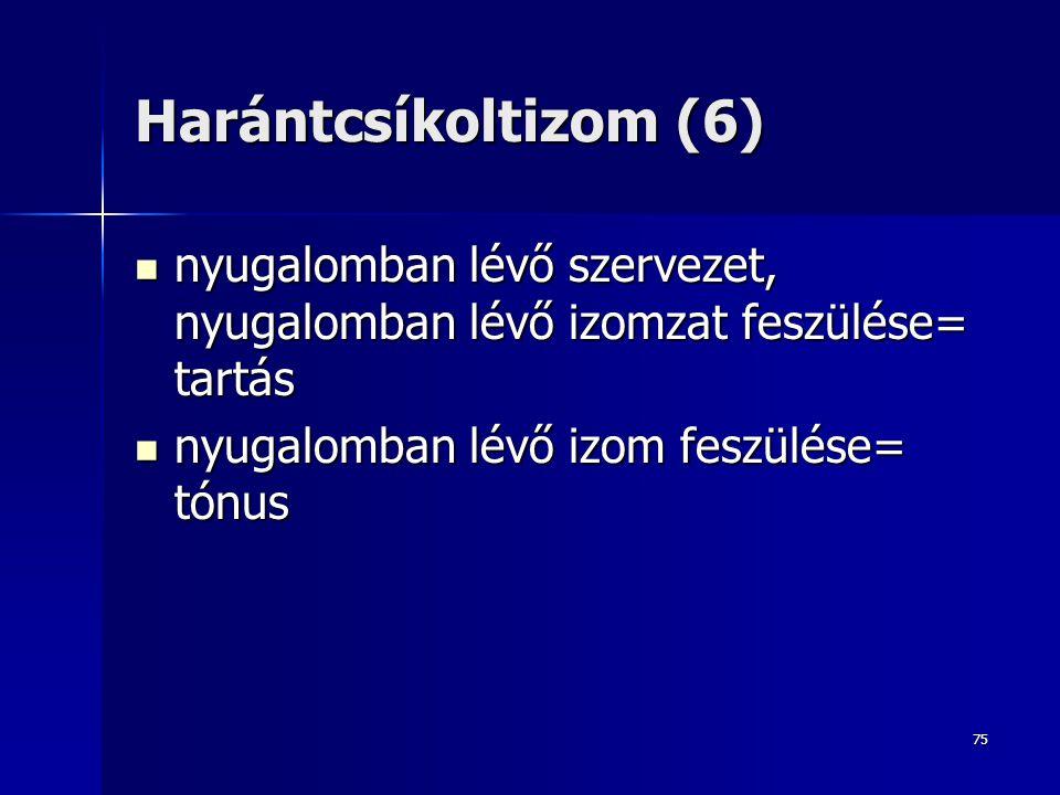 Harántcsíkoltizom (6) nyugalomban lévő szervezet, nyugalomban lévő izomzat feszülése= tartás.