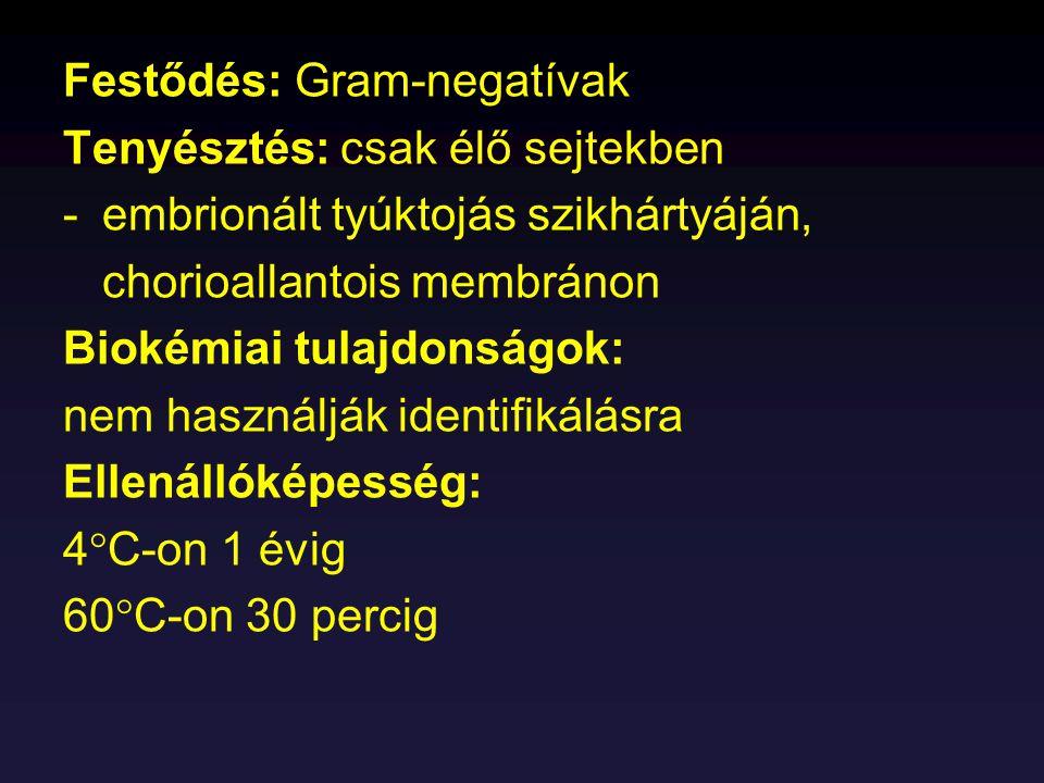 Festődés: Gram-negatívak