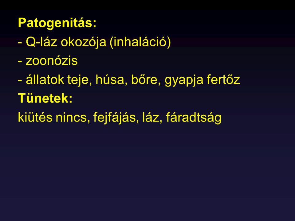 Patogenitás: - Q-láz okozója (inhaláció) - zoonózis. - állatok teje, húsa, bőre, gyapja fertőz. Tünetek: